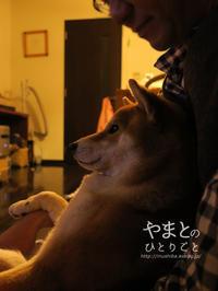 犬の本 【ドッグ・マッサージ】 - yamatoのひとりごと