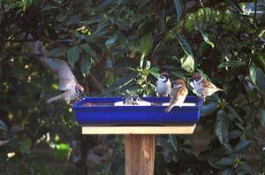 ぶん屋の鳥餌一号店は満員御礼 - ぶん屋の抽斗