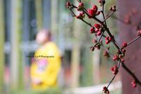 成人式・前撮り【古河市】 - 茨城 栃木 群馬 埼玉 千葉 出張撮影 Hallura-La * Photo blog
