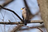 コイカル! 初モノ - 野鳥写真日記 自分用アーカイブズ
