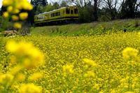 春色列車 - デジタルで見ていた風景