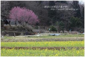 春らしい色 - 明日には明日の風が吹く