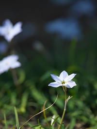 春の息吹 - 節操のない写真館