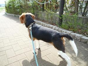 散歩の健太 - つれづれ