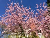 いきなり春でびっくり! - バーゼルから 気の向くままに