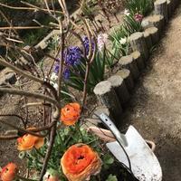 春を持ちこむ - ひとりごと