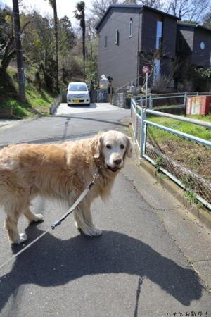 ポカポカゴロゴロ♪ - ハナとお散歩!