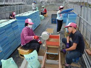 水稲砂入れ作業・プランター洗い・イチゴの収穫 - ジョブファーム活動ブログ