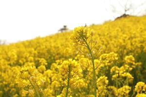 春が咲く - なちゅフォト