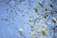 神代農場一般公開~いろんな花たち - 柳に雪折れなし!Ⅱ