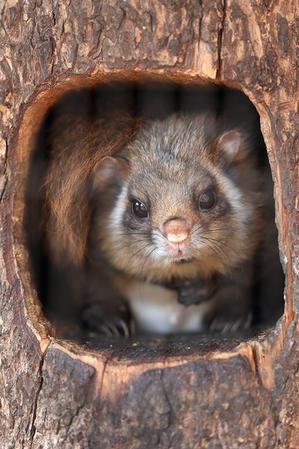 3月25日(土)春風邪 - ほのぼの動物写真日記