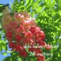 2周年スペシャルメニュー③ - aloha healing Makanoe