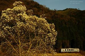 モクレンが咲き始める頃 - ローカル鉄道散歩
