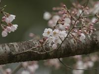 春の立田山 3月25日 曇り時々雨 - たった一度の出会いから