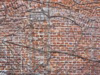 Wall 2017#03 - 1/365 - WEBにしきんBlog