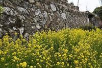 石垣と菜の花 - ふらりぶらりの旅日記