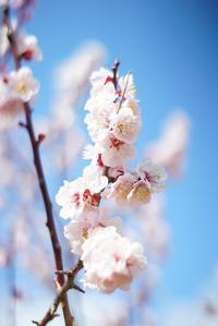 六甲山の北側にも春の気配 - ネコトクラス