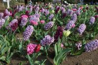 花の便りは横浜から part4 - CHIROのお庭しごと