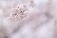 春的な - 光と遊ぶ