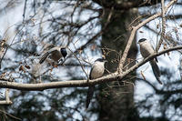 ゴチャゴチャ - 趣味の野鳥撮影