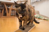 にゃんず日記と登場猫人たちの紹介 - にゃんず日記