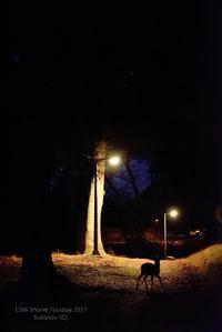 一ヵ月前の寸景 @ 1266回 修二会 - 東大寺が大好き