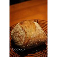 ポーリッシュ種のリュスティック - パン教室tocotoco