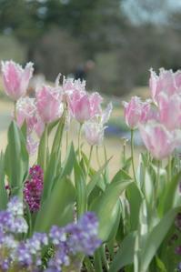 春待つ季節 6 - 気ままにお散歩