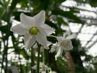 那珂市を歩く 熱帯植物館2 @茨城県 - 963-7837