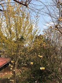 城山カタクリの里 - NPHPブログ版