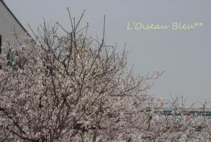 トリドリ - Life & Flowers -