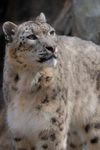 ミルチャの崖登り - 動物園に嵌り中