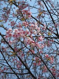 上野公園のサクラ - 旦那たちの憩いのブログ