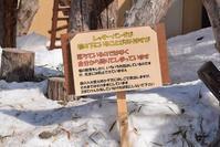 雪解けの旭山詣・その5 - レッサーパンダ☆もふてく放浪記