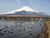 富士山麓へ - コヨーテの日記