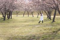 Spring has come. - HI KA RI