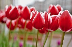 Today's Tulip* - ガーリーで大人可愛い雑貨屋さん  rinnomori*sasebo