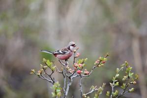 - T/Hの野鳥写真-Ⅱ