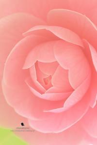 表情 - お花びより