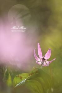 春の妖精 - Flores*Flores