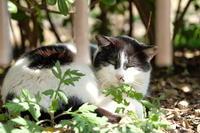 homeless cat - meno mosso