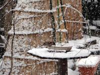なごり雪とスズメの餌台、福寿草など♪ - 窓の向こうに