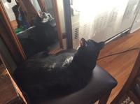 鏡と猫 - にゃんこと暮らす・アメリカ・アパート
