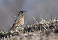 この冬であえた鳥たちⅡ - 旅のかほり