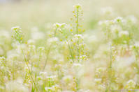 春に、ハートを捧げる花 - ひつじ雲日記