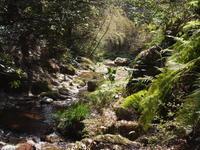 黒山三滝 - 庭日和