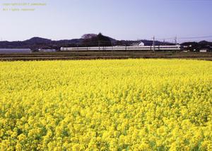 春色の - ローカル鉄道散歩