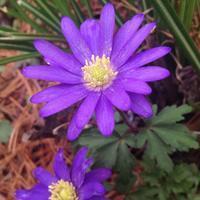 名も知らぬ紫の花は、、 - 幾星霜Ⅱ