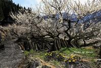 奥三河の春 - さんたの富士山と癒しの射心館