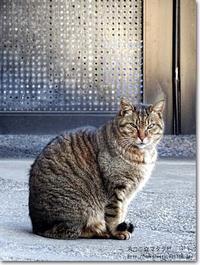 【し】姿勢の良いネコ:しせいのよいねこ - ネコニ☆マタタビ